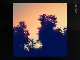 Twilight Trees.jpg